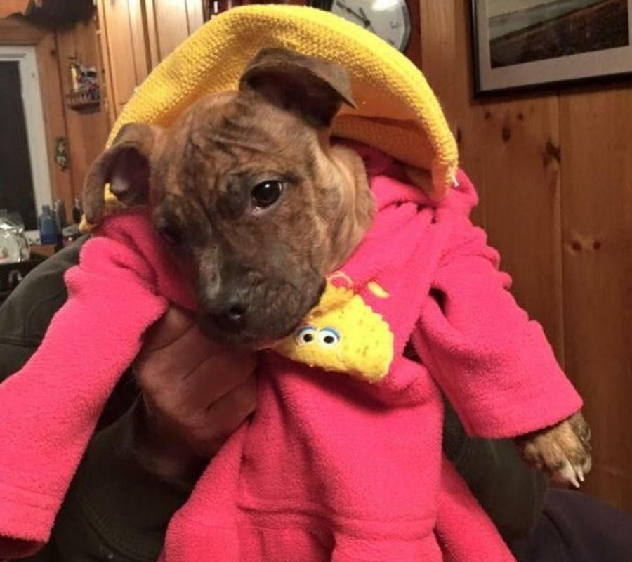 dog puppy clothing dad holding dress up