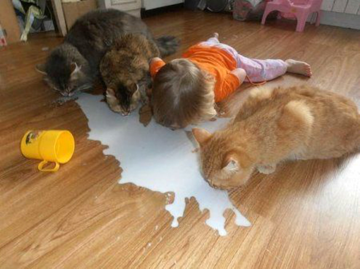 kid drinking milk with cats on the floor