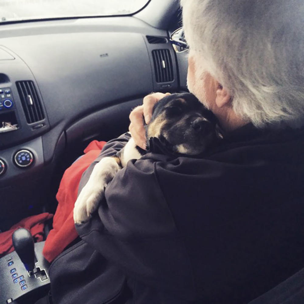 dog and dad ride home