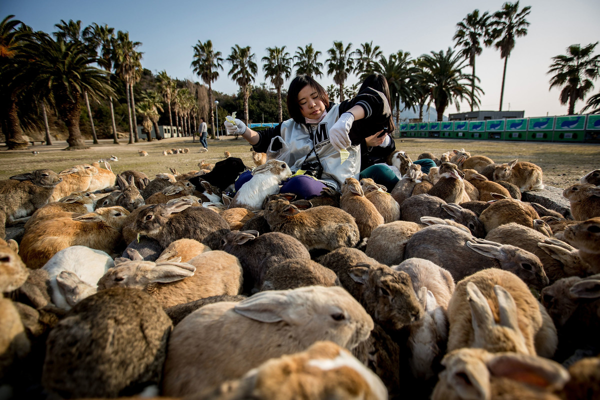 island of Okunoshima, Japan that's filled with bunnies