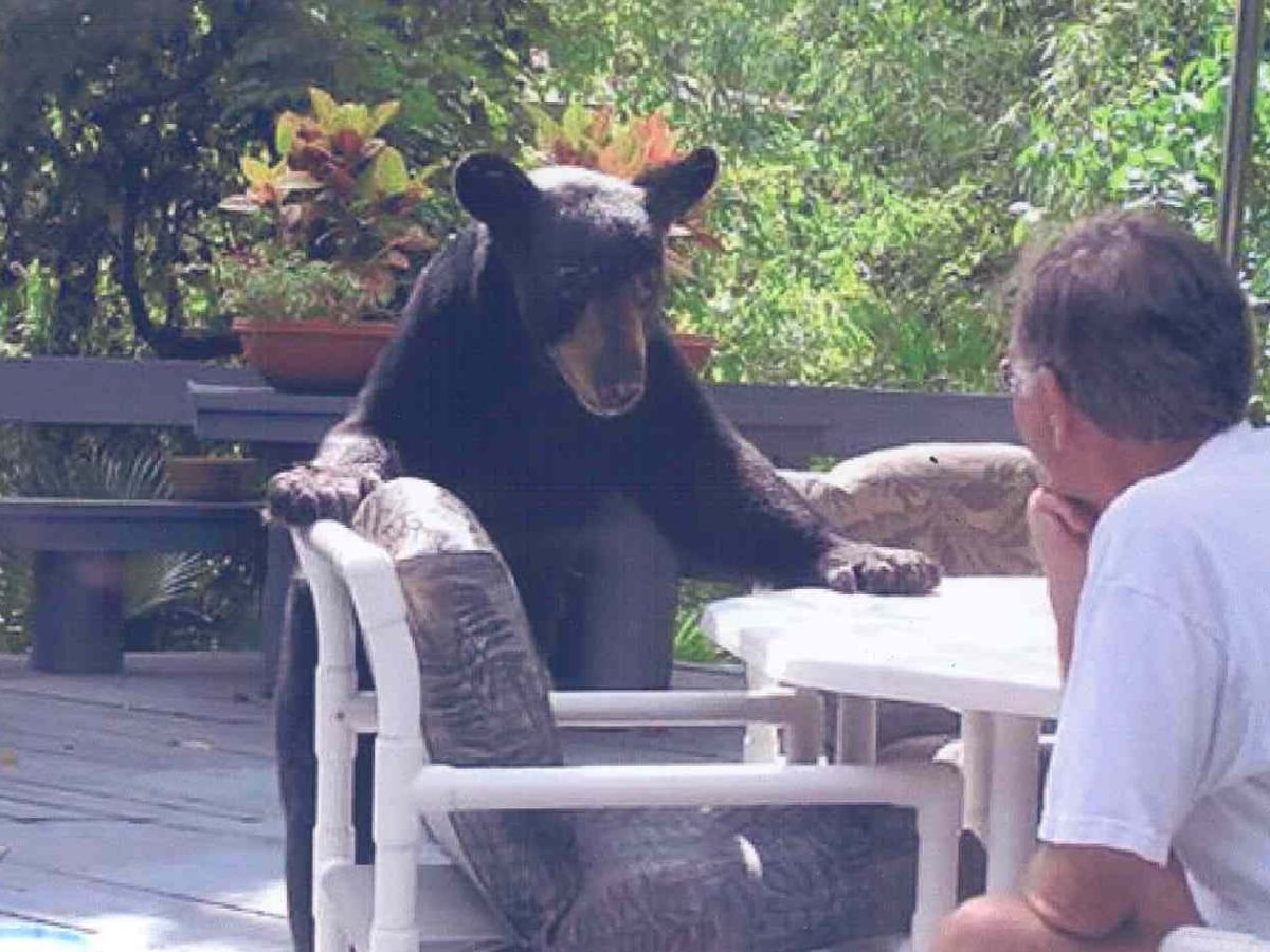 bear stare with grandpa at table