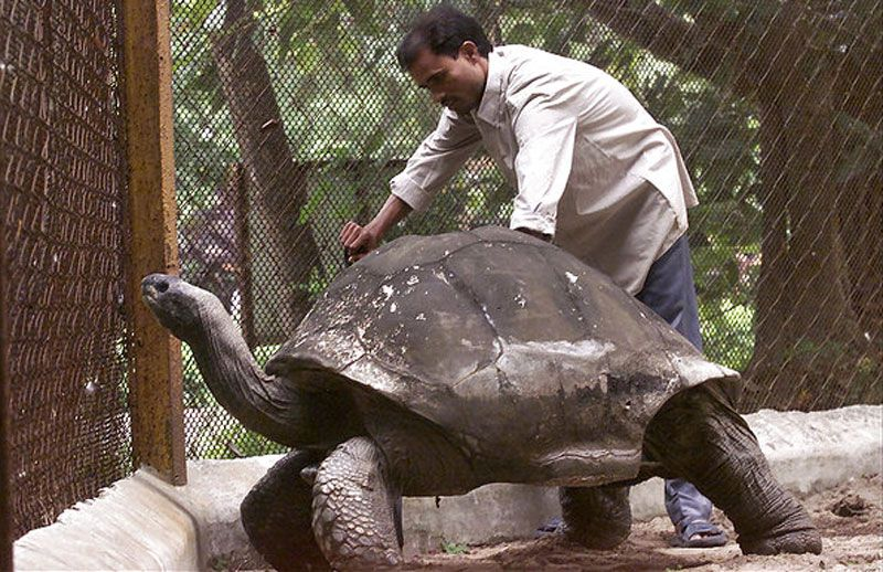 adwaita the oldest tortoise