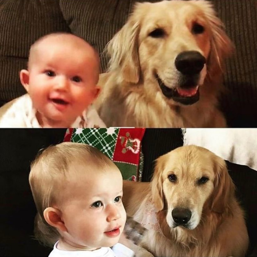 family dog before and after babies