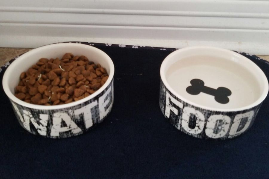 food and water bowls for dog mixed up