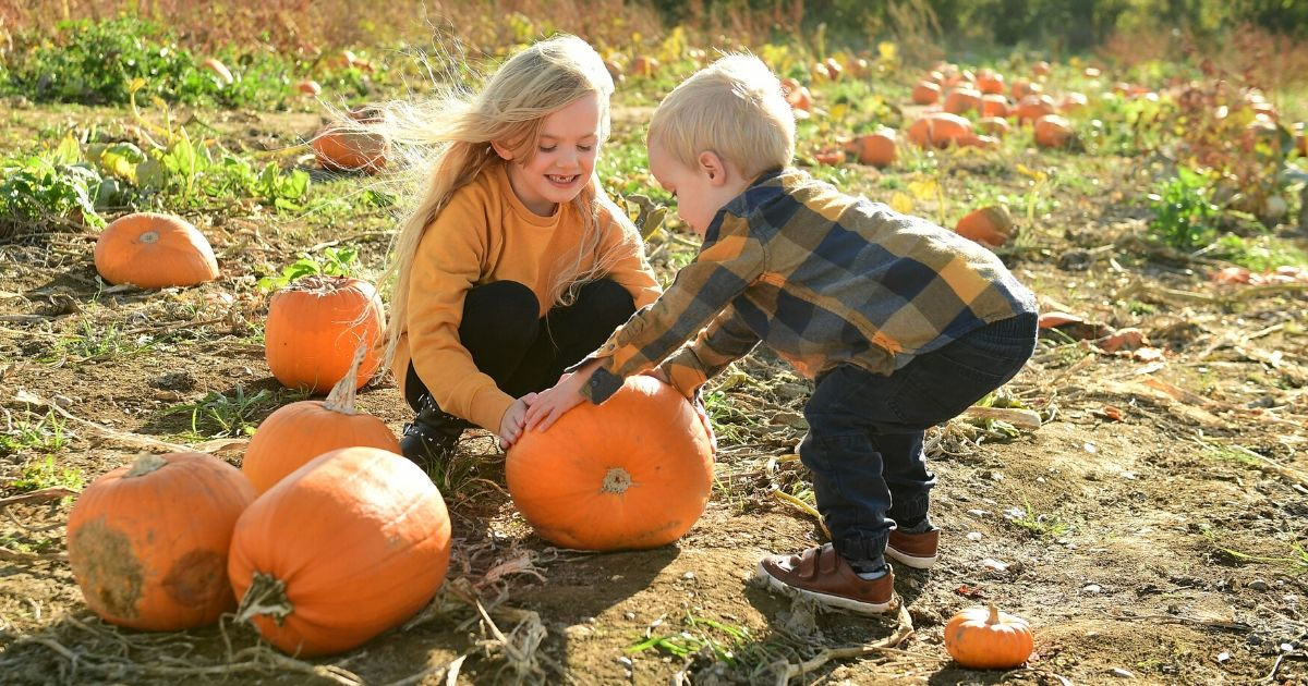 Two children pick their pumpkin for Halloween, at the Pumpkin Patch