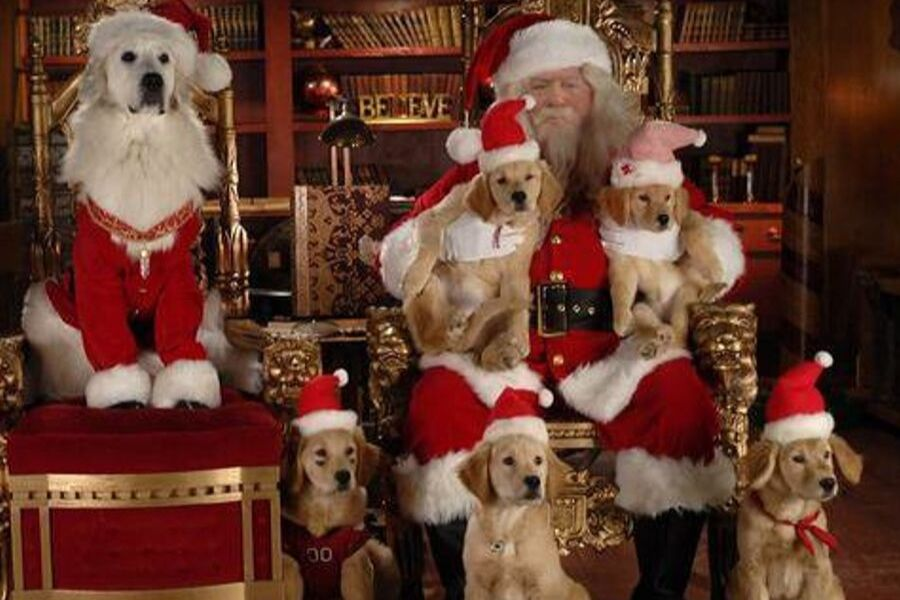 santa with dogs
