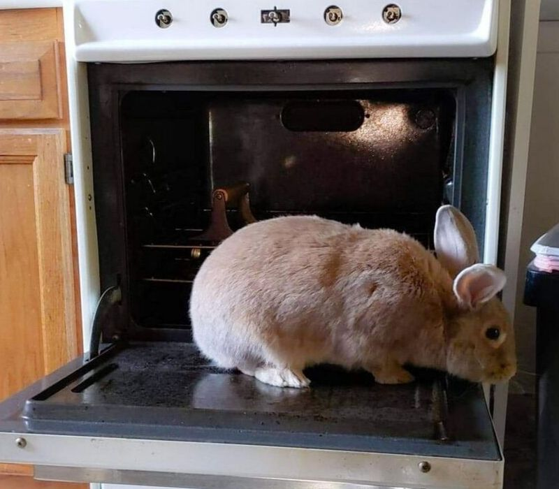 bunny in the oven