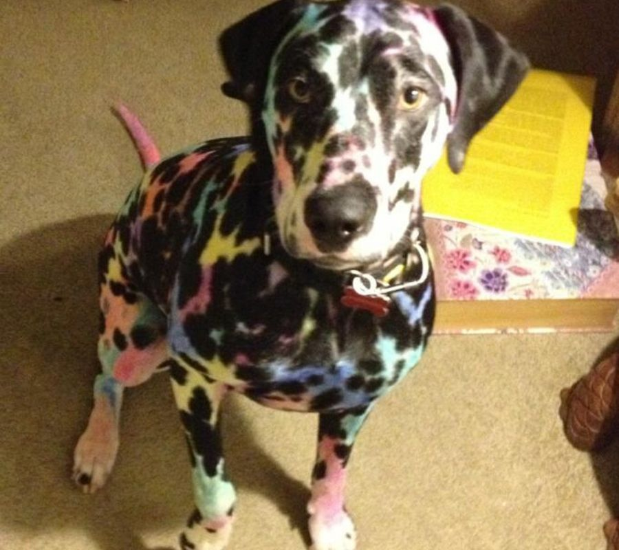 a kid colored all over their dog