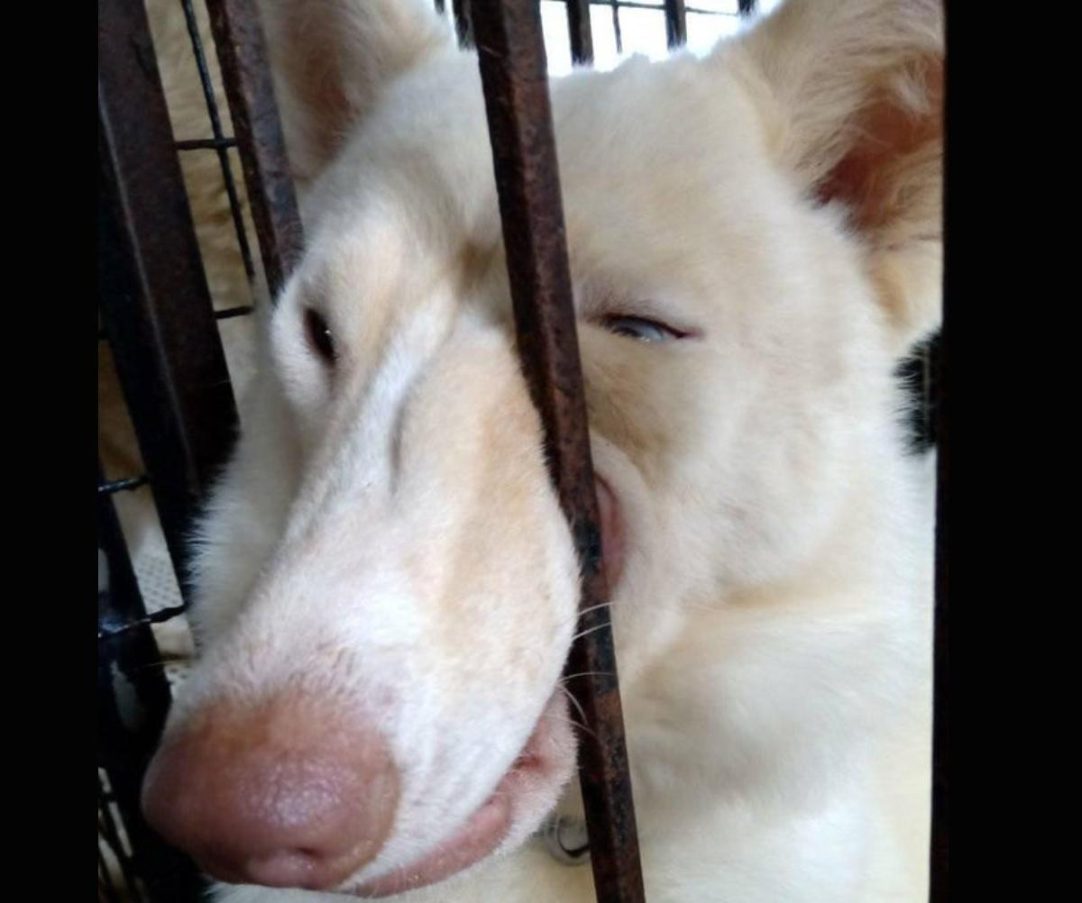 dog poking its nose through bars
