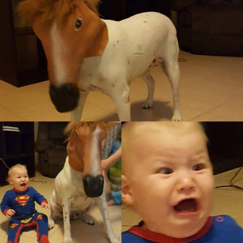 dad put a horse mask on his dog, scared son
