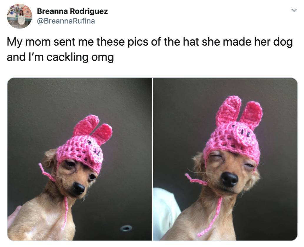 mom knitted a hat for the dog and it's hilarious