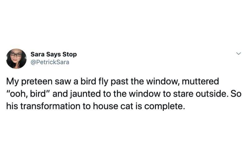 My preteen saw a bird fly past the window, muttered
