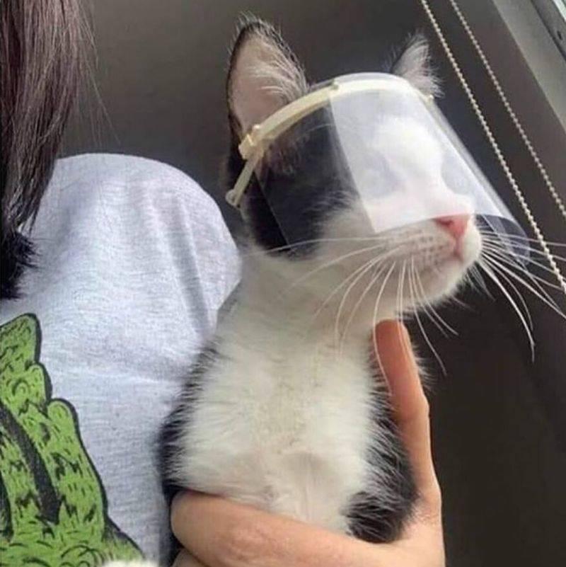 cat wearing a little mask