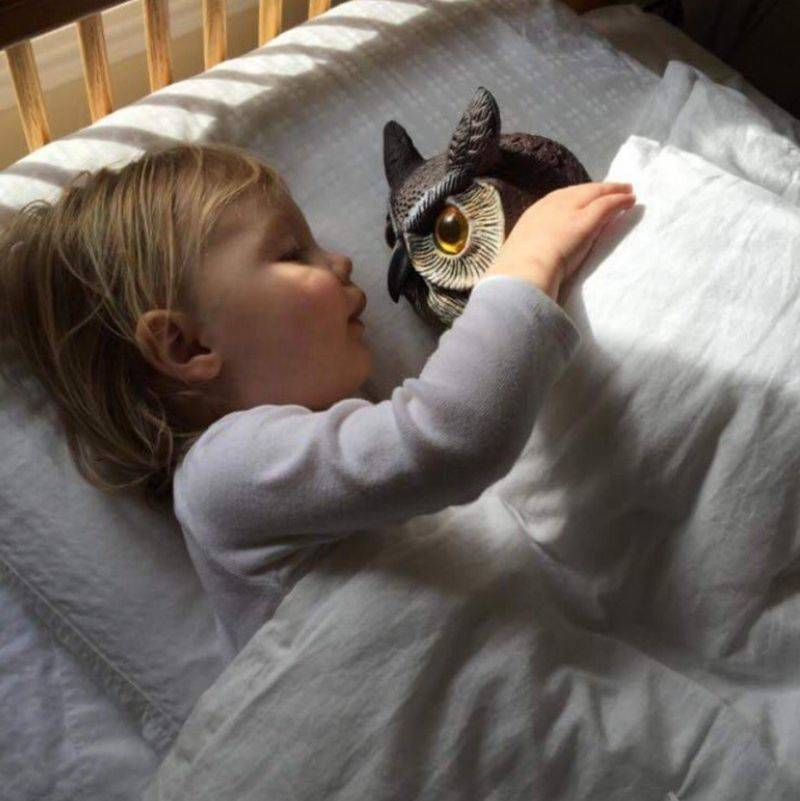 a little kid loving her plastic owl