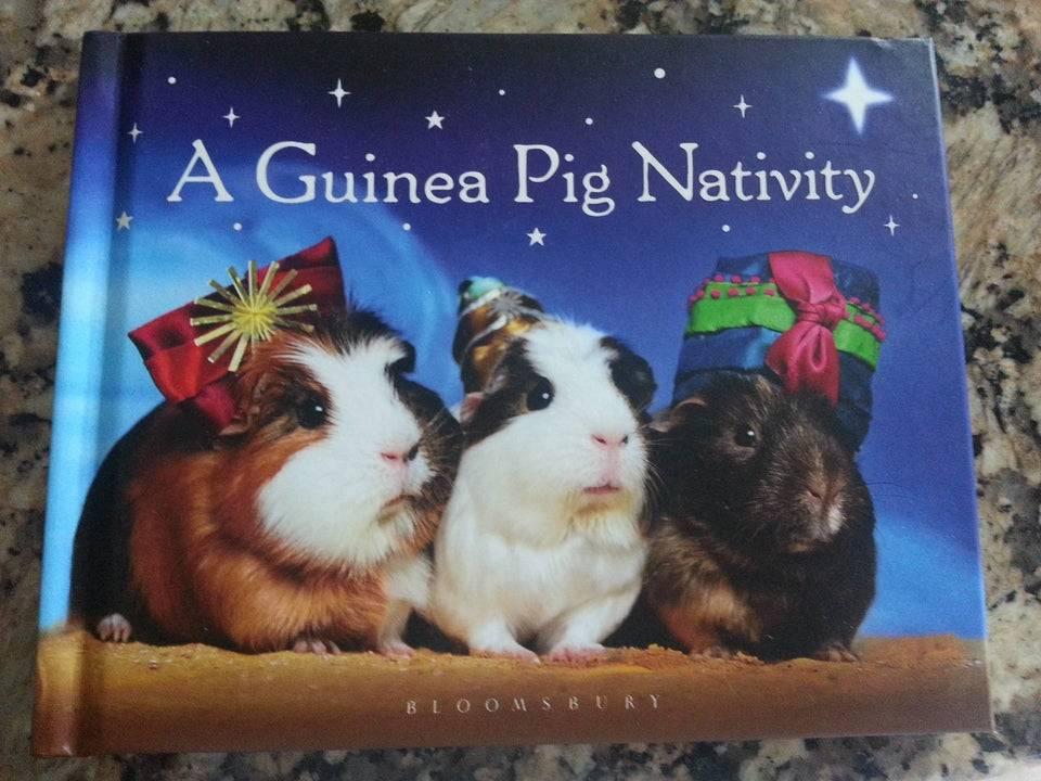 guinea pig nativity scene
