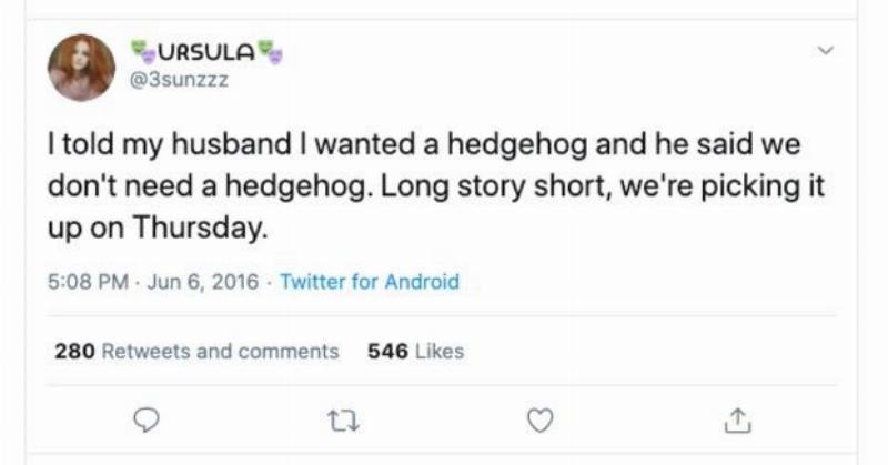husband compromises about getting hedgehog