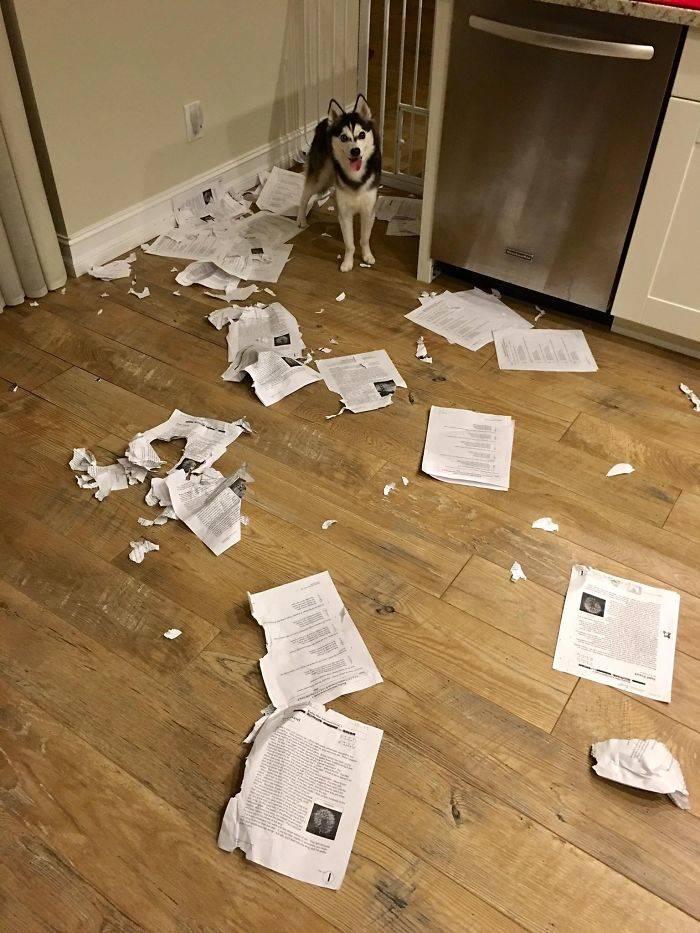 dog ate work