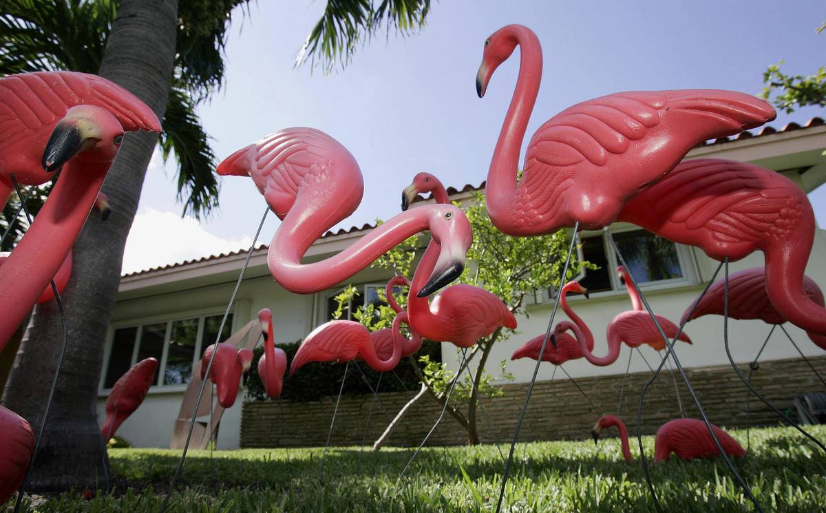 Plastic pink flamingos on lawn