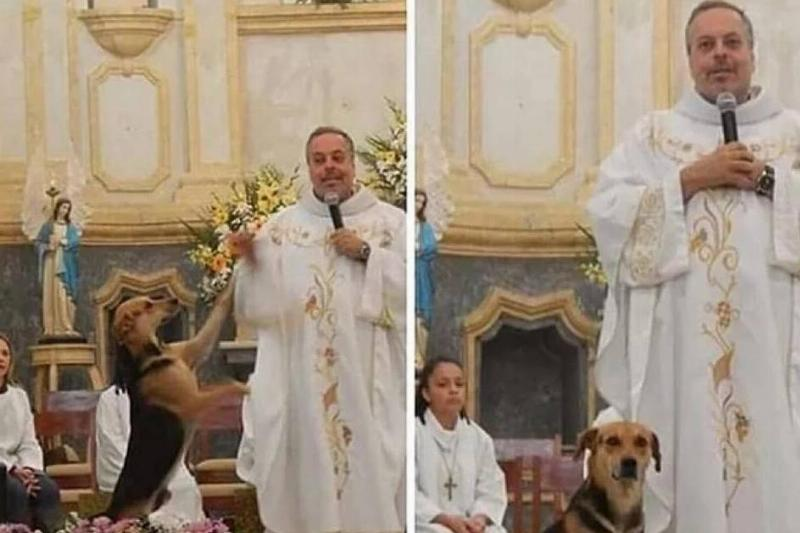 priest brings stray dogs to be adopted at church