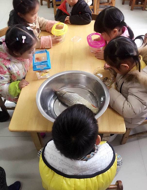 children have fish in aquariums at school, but one has a whole slamon in a metal bowl with no water