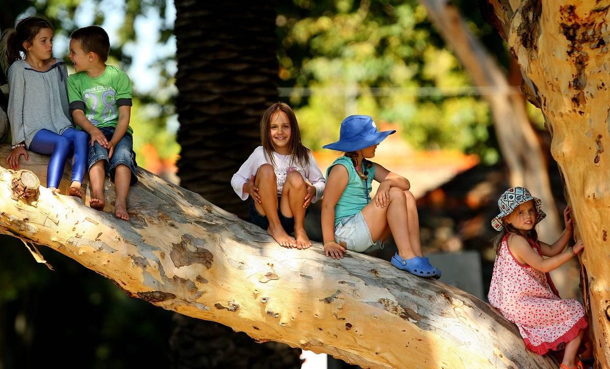 Children climb a tree to get a better view