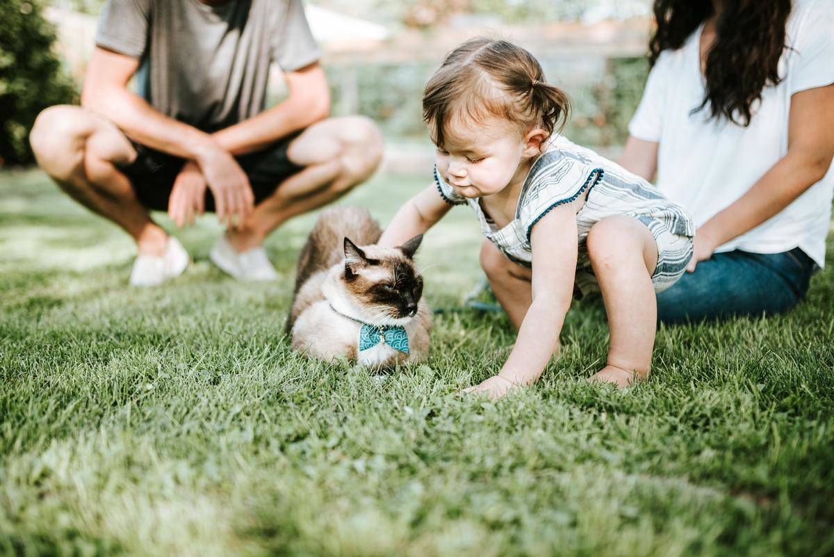 kid playing with cat on the grass with parents watching