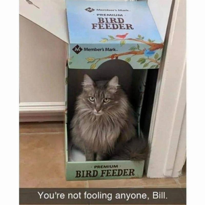 cat in bird feeder box