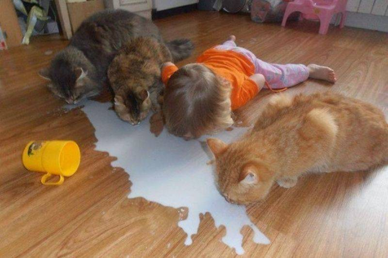 a little girl drinking milk off the floor with the cats
