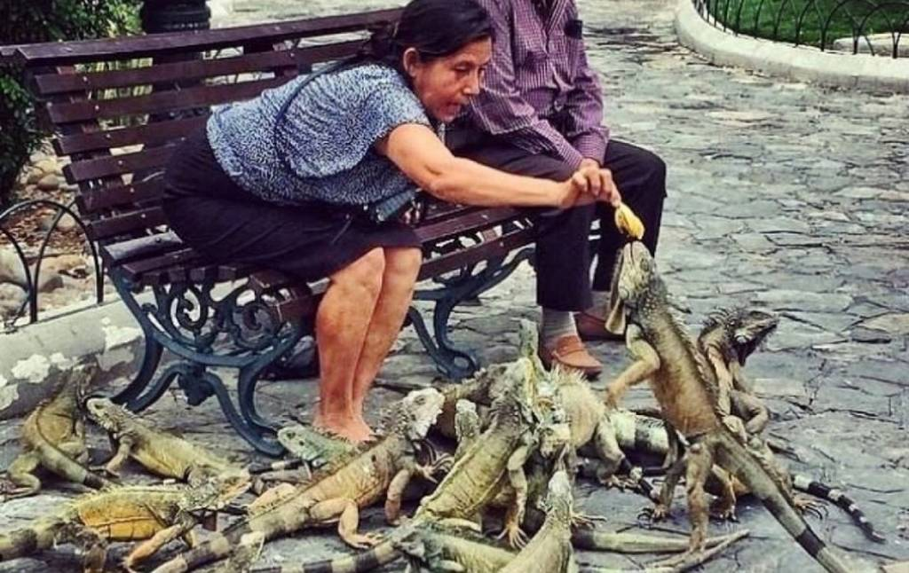 Picture of woman with lizards